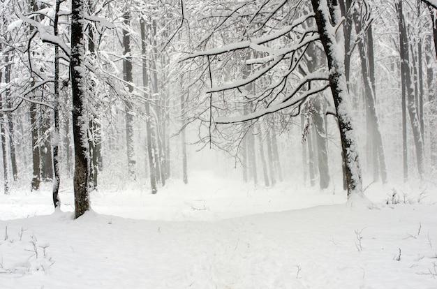 아름다운 겨울 숲과 길 프리미엄 사진