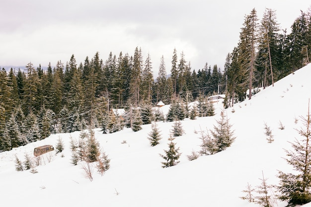 Beautiful winter landscape with coniferous trees Free Photo