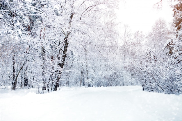 Beautiful winter landscape with snow covered trees. happy new year. merry christmas Premium Photo