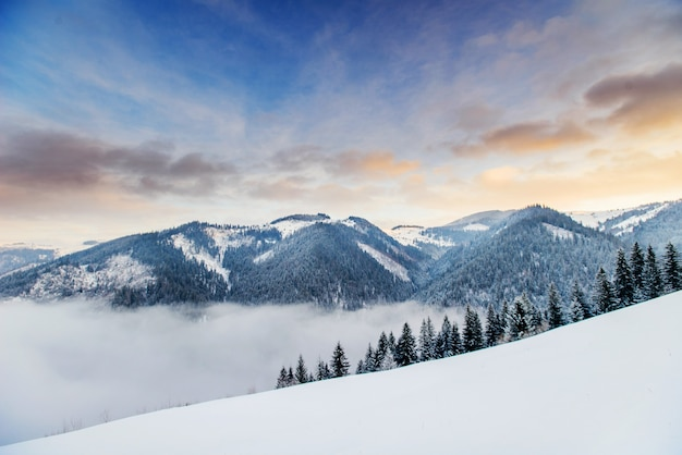 Beautiful winter landscape Premium Photo