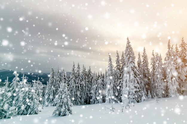 Beautiful winter mountain landscape Premium Photo