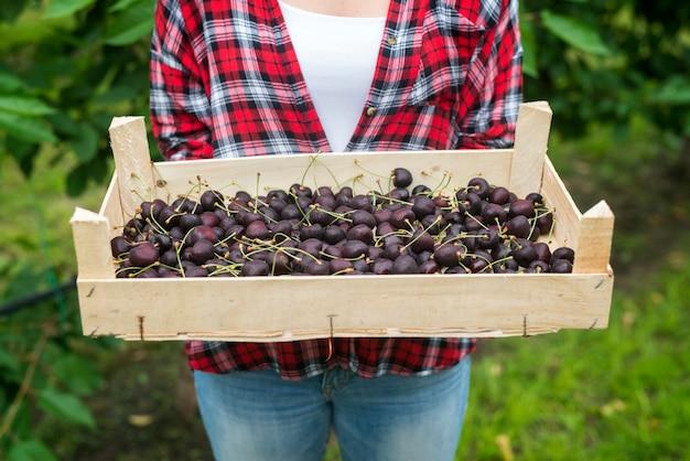 Bella donna agricoltore che tiene cassa piena di ciliegie nel frutteto verde Foto Gratuite