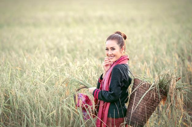 Beautiful woman, thai farmer harvesting rice fields Premium Photo