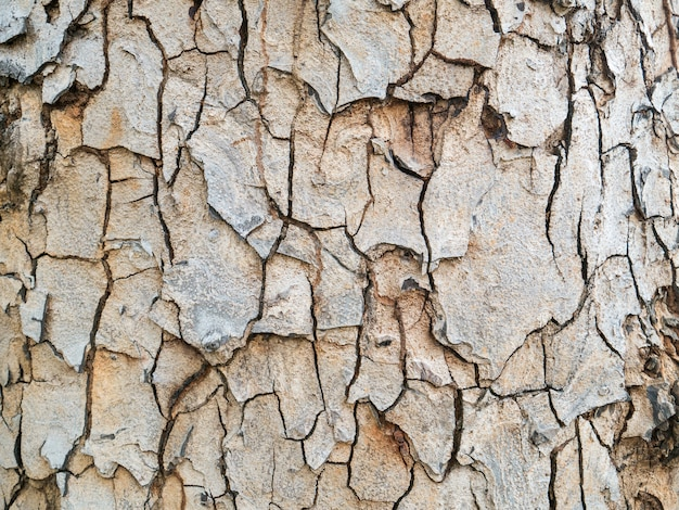 Beautiful wooden bark Premium Photo