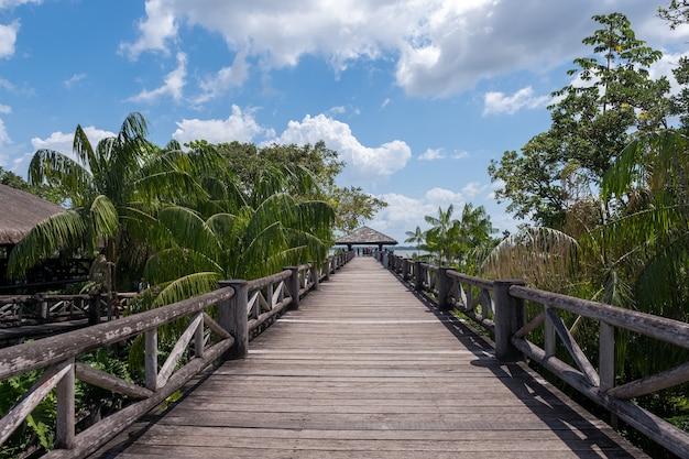 Красивый деревянный мост среди тропических пальм под пасмурным небом в бразилии Бесплатные Фотографии