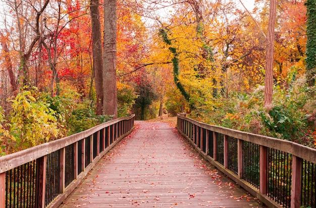 Bellissimo sentiero in legno che porta gli alberi colorati mozzafiato in una foresta Foto Gratuite