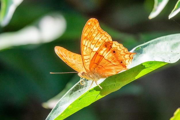 Красивая желтая бабочка сидит на листе Бесплатные Фотографии