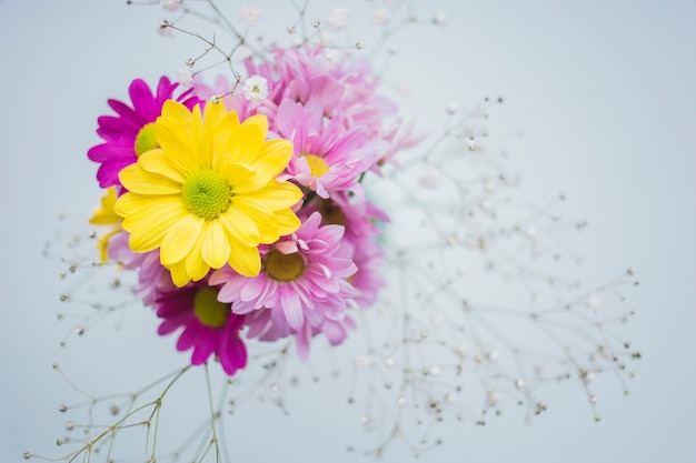 beautiful yellow flower with purple flowers photo  free download, Beautiful flower