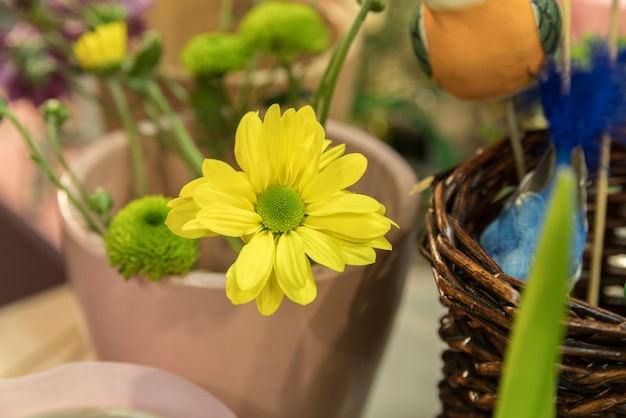 Beautiful yellow flowers and buds in the pot plant Free Photo