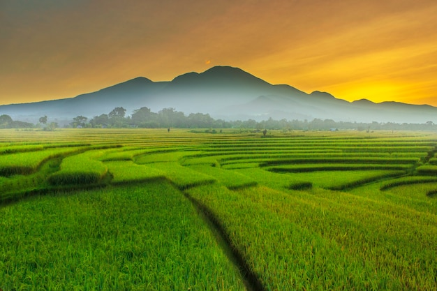 The beauty morning at rice fields the sunligth is very cool and rainbow after rain Premium Photo