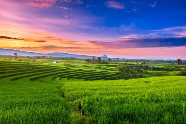 Beauty morning with amazing sunrise at paddy fields indonesia Premium Photo