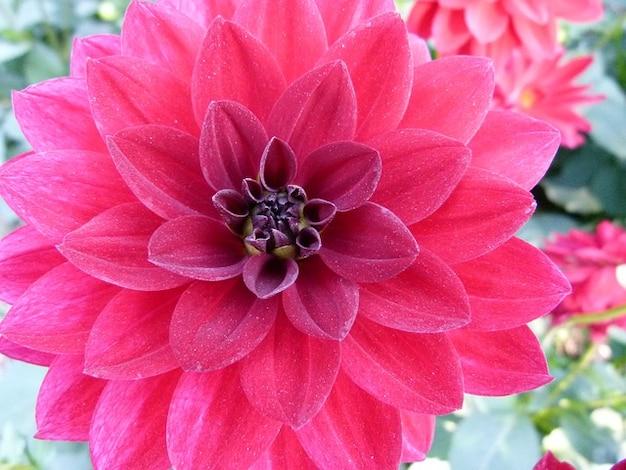 Beautiful Plants And Flowers Beauty Plant Flower Garden
