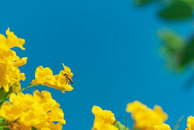 Bee flying around yellow flower in blue sky Premium Photo