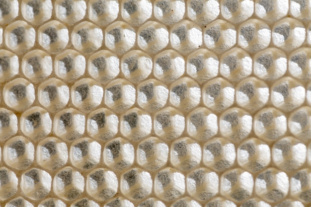 Bee honeycombs. cell cells on frame. Premium Photo
