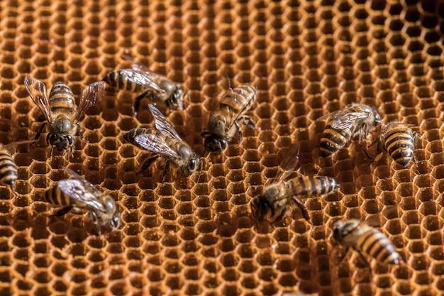 The bee is on the honeycomb. Premium Photo
