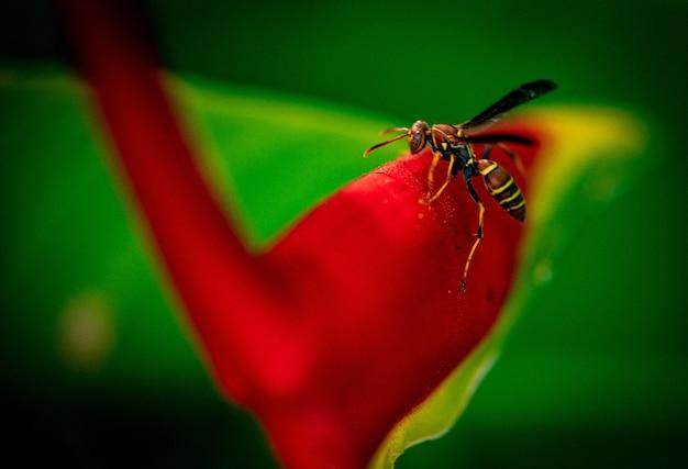 庭の真っ赤な花の上に座っている蜂 無料写真