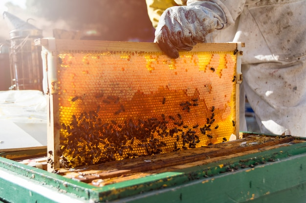Bee Free Photo