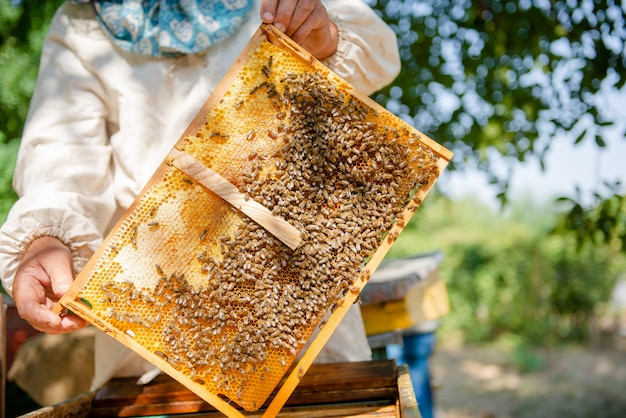 The beekeeper checks the hive. looks at bees in the sun. Premium Photo