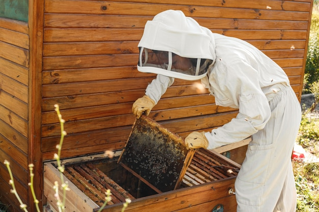 Beekeeper pulls out from the hive a wooden frame with honeycomb. collect honey. beekeeping concept. Premium Photo