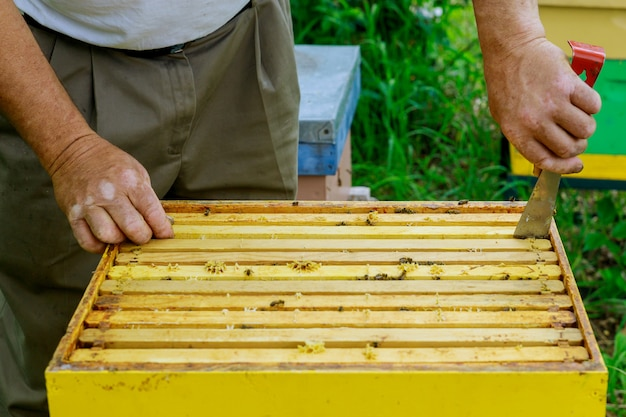 Beekeeping apiculture beekeeper works with bees near hives taking out frames with honeycombs for inspection Premium Photo