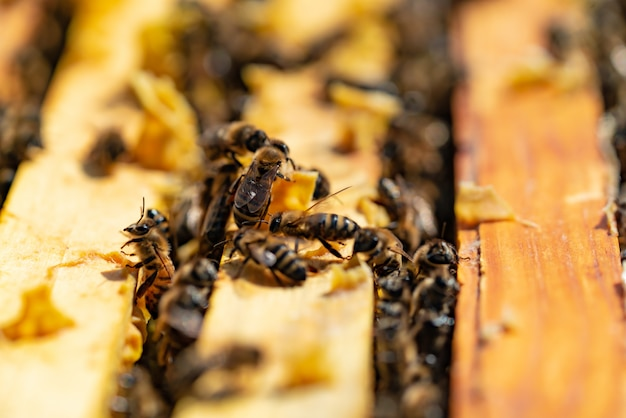 Bees bring honey to their beehives in warm weather all day Premium Photo