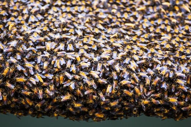 Пчелы внутри улья Premium Фотографии