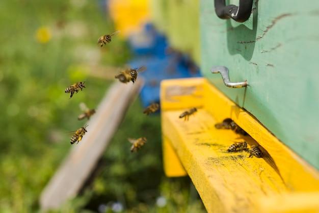 Bees on wood box Free Photo