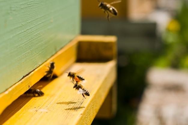 Bees on wood Free Photo
