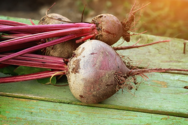 Beets on a bench Premium Photo
