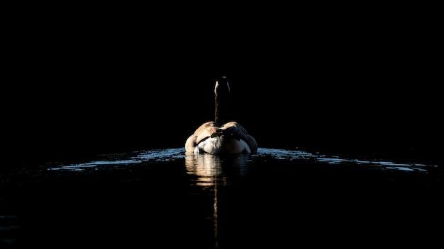 夜に湖で泳いでいるアヒルの後ろのショット 無料写真