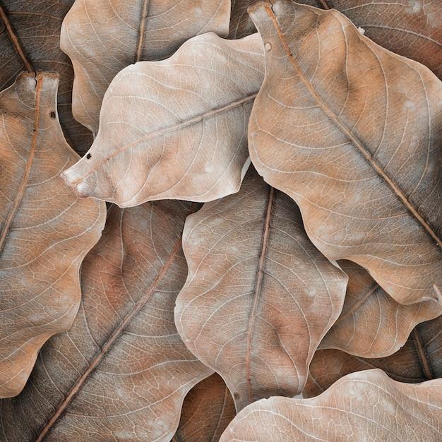 베이지 색 잎 무늬 디자인 공간 무료 사진