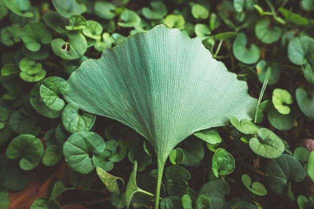 Being special, a single leaf stands out from the rest of the plants, with muted tones and added film grain. Premium Photo