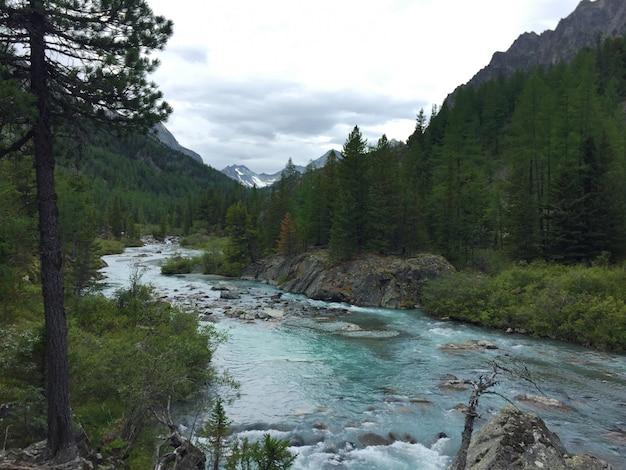 流れる森の青い川。 belukha国立公園、アルタイ山脈、シベリアのkucherla川 Premium写真