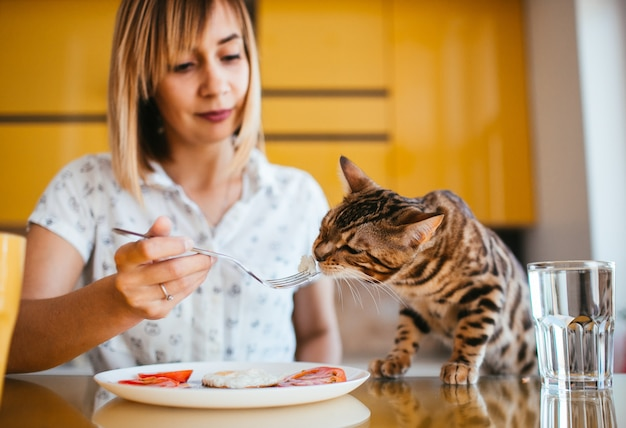 Bengal cat tastes breakfast from woman's fork Free Photo