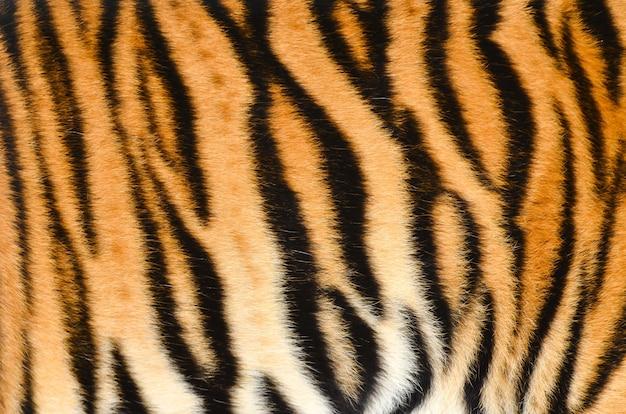 Bengal Tiger Fur