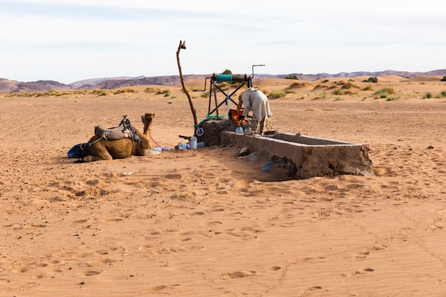 Berber and camel near the well Premium Photo