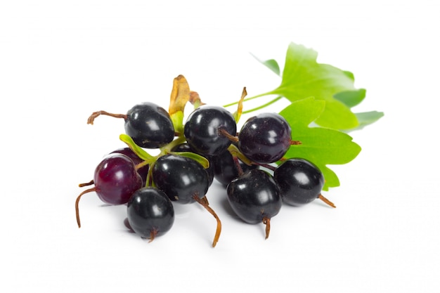 Berries black currant with green leaf. fresh fruit, isolated on white background. Premium Photo