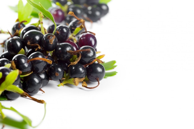 Berries black currant with green leaf. fresh fruit, isolated on white . Premium Photo