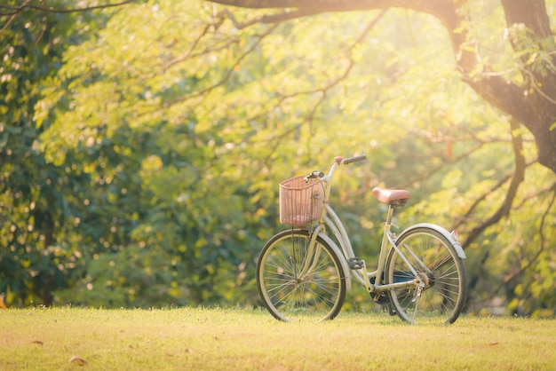 Bicycle on green grass in the park at sunset. Premium Photo