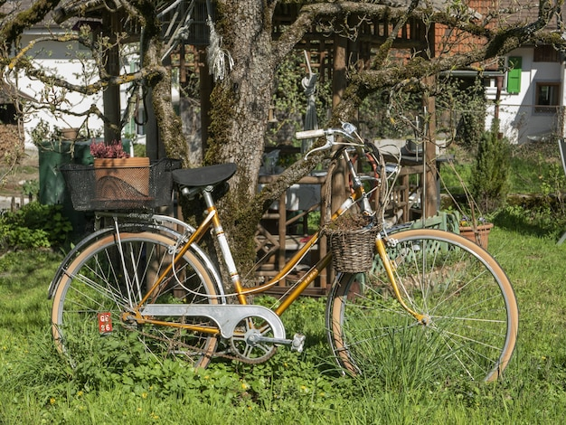 Bicycle parked in the green garden next to a tree Free Photo