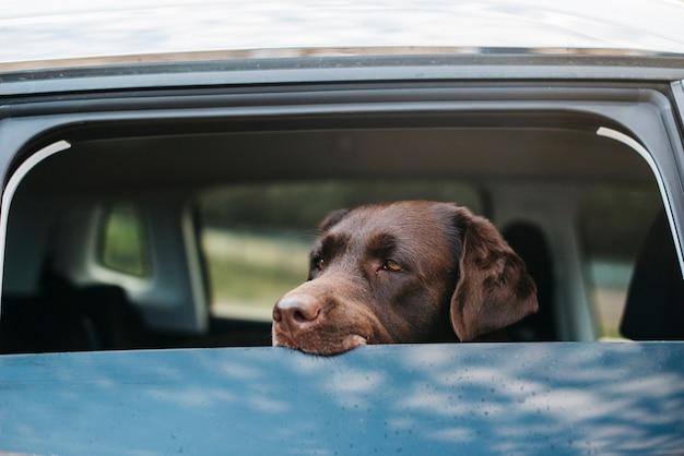 Big black dog in car Free Photo