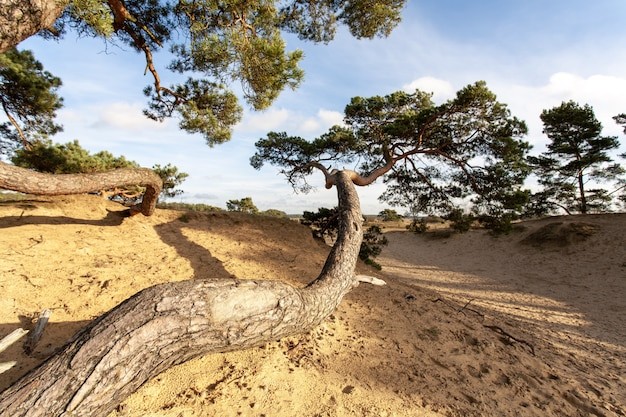 Grande albero curvo in una superficie sabbiosa durante il giorno Foto Gratuite