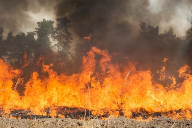Большой пожар на сельскохозяйственной земле возле леса Premium Фотографии