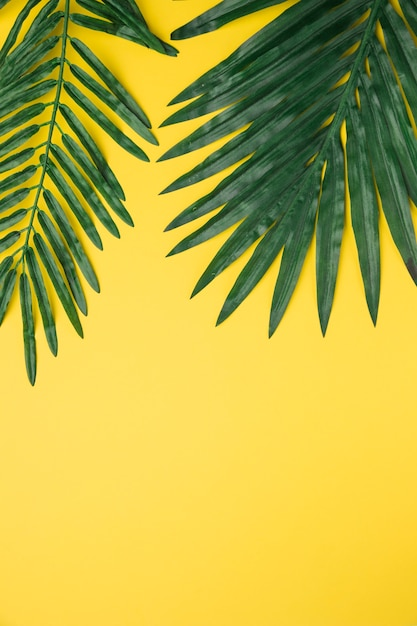 Big green leaves on yellow background Free Photo