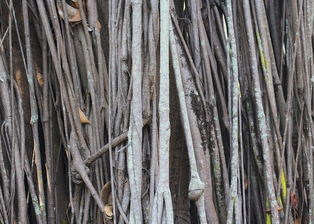 Big tree root Premium Photo