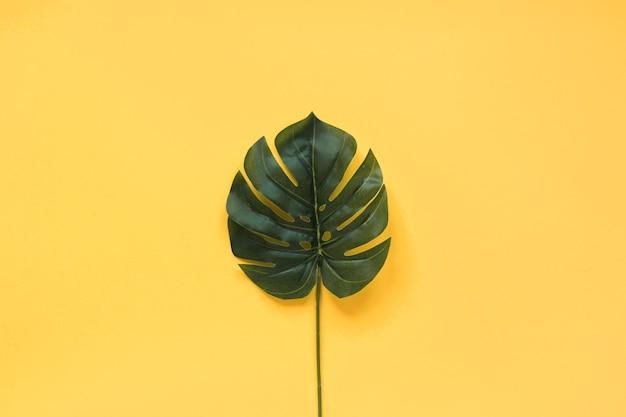 Big tropical green leaf Free Photo