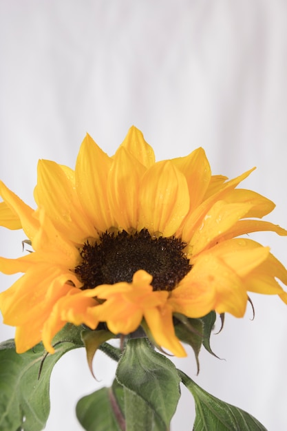 Big Yellow Flower With Green Leaves Photo Free Download