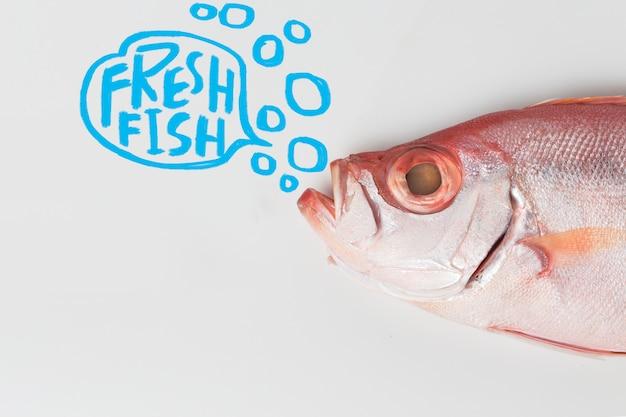 Bigeye fish isolated on white background Free Photo