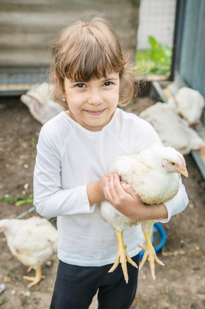 Bio chickens on a home farm a children. Premium Photo