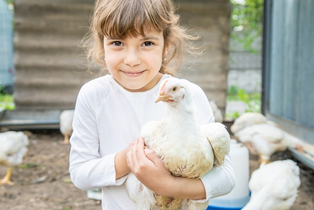 Bio chickens on a home farm a children. Premium Photo